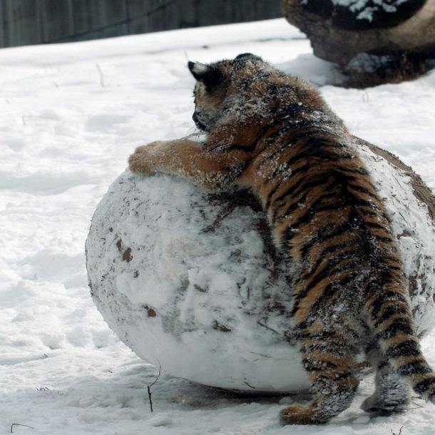 Stop building mental snowballs