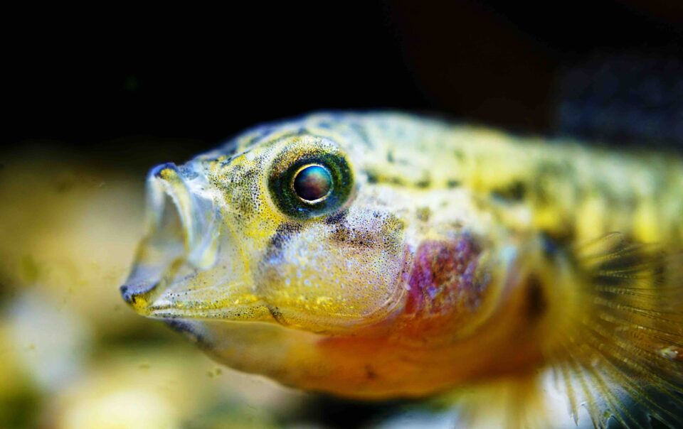 image of fish to illustrate reaction